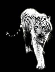 tigre tiger by ZHYRKO