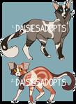 Cat adoptables | Auction | CLOSED