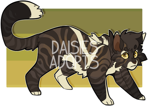 Cat adoptable | Auction | CLOSED