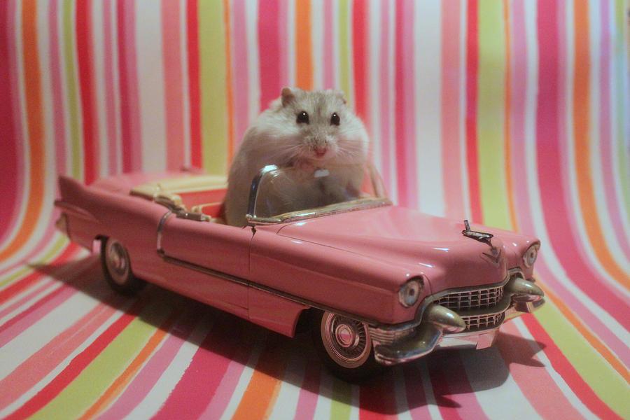 My new Cadillac by SpiritMountain