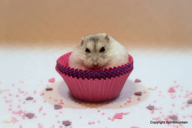 My favourite cupcake by SpiritMountain