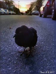 Lonely Black Bird