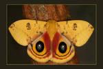 Io Moth Series 3