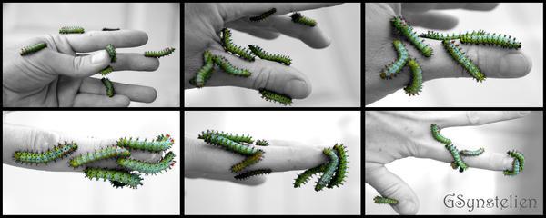 Finger Food by UffdaGreg