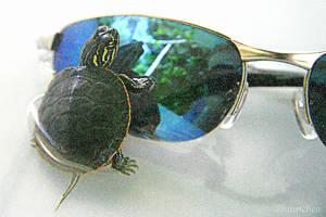 Turtle Shades by UffdaGreg