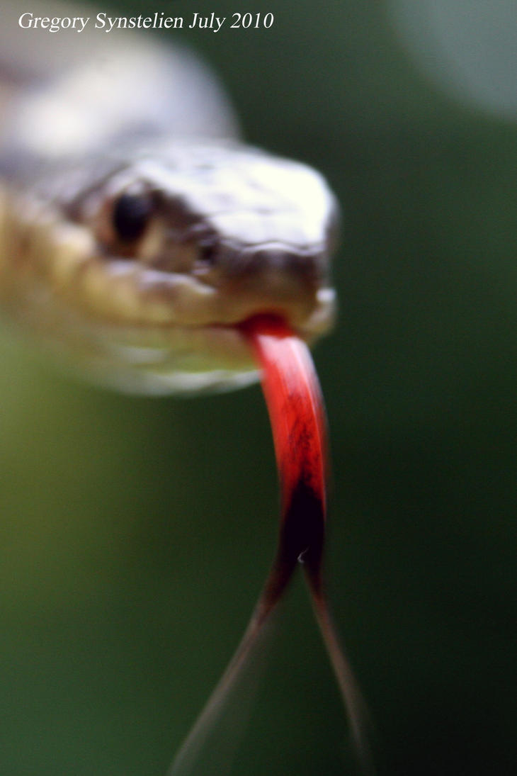 Garter Snake July 2010 by UffdaGreg