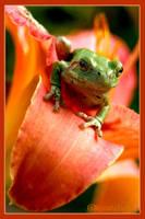Tree Frog Flower by UffdaGreg