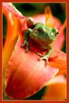 Tree Frog Flower