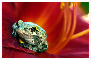 A Little Pollen by UffdaGreg
