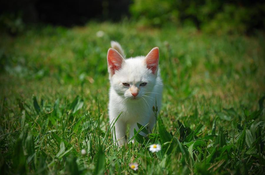 Kitten (Free Fella !) by GregColl