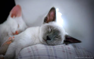 Kitty Mac Nap by ksb-artist
