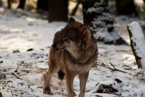 Wildpark Schwarze Berge V by RescueWolf
