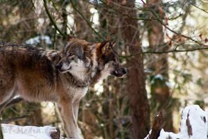 Wildpark Schwarze Berge III by RescueWolf