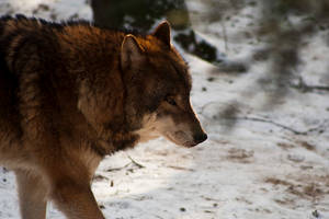 Wildpark Schwarze Berge I by RescueWolf