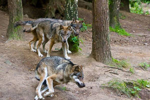 Wildpark Schwarze Berge XII by RescueWolf