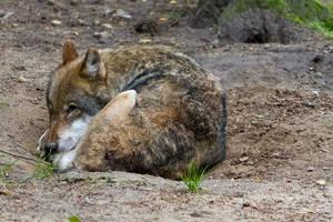 Wildpark Schwarze Berge XVI by RescueWolf
