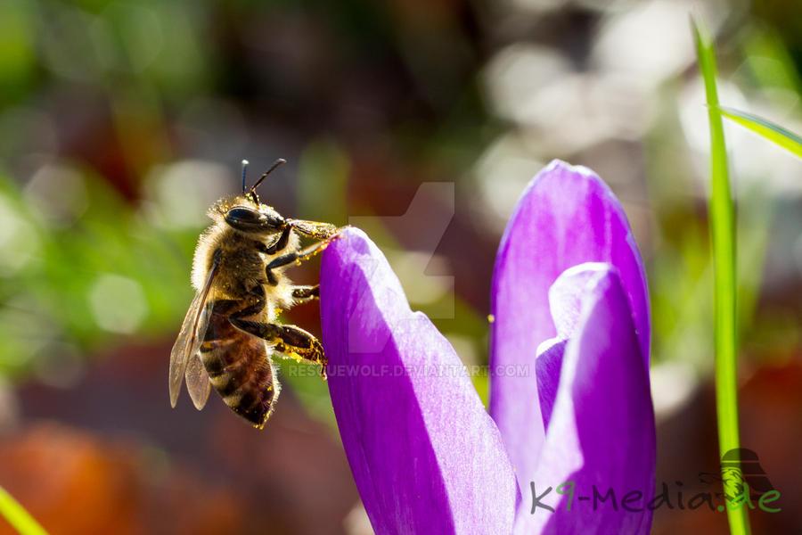 Bee II by RescueWolf