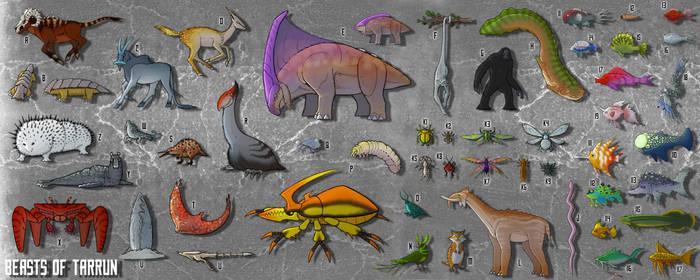 Tarrun: Native Wildlife
