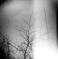 Holga nb 1 by thaissa