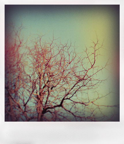 Winter by thaissa