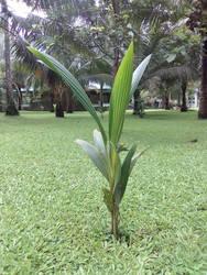 Tall Leaves