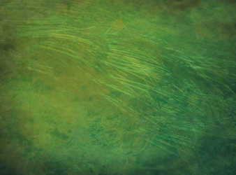 texture 1 green by Horse-Paint-Designs
