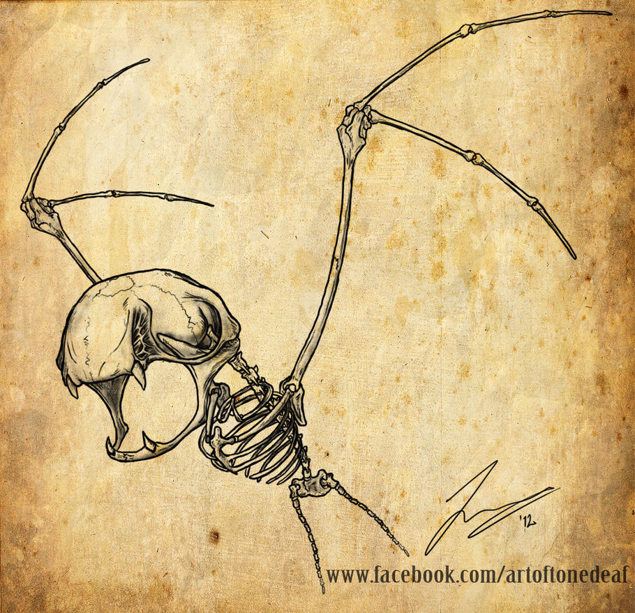 Zubat skeleton by acidic055