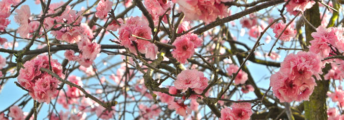 Spring Blossoms #1