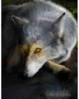 Wolf Edit 2