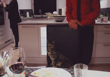 Feed me, human by Kamishiro-Yuki