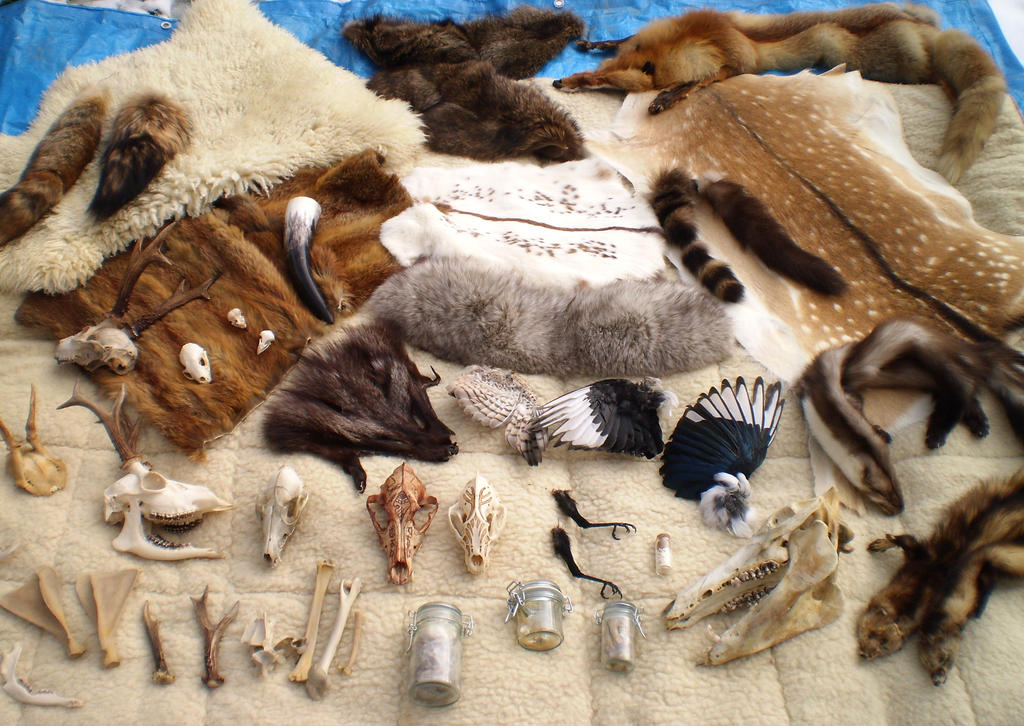 Taxidermy Collection By Gears And Bones On Deviantart