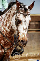 appaloosa beauty by xxhorseback