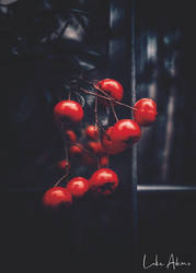 Sorbus by Purpleskulls