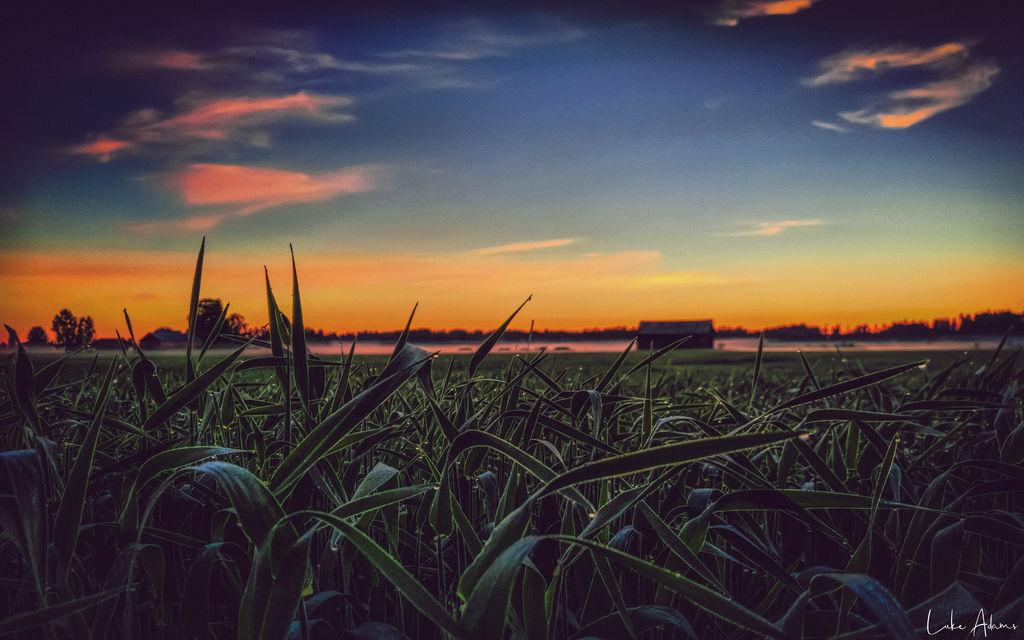 Fields of Grass by Purpleskulls