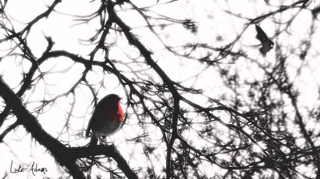 The Robin