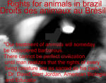Rights for animals in brazil! - Droits des animaux