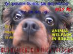 Salve os animais! Bem-estar animal para o Brasil!