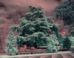 Santo Tirso in infraRed by siulzz
