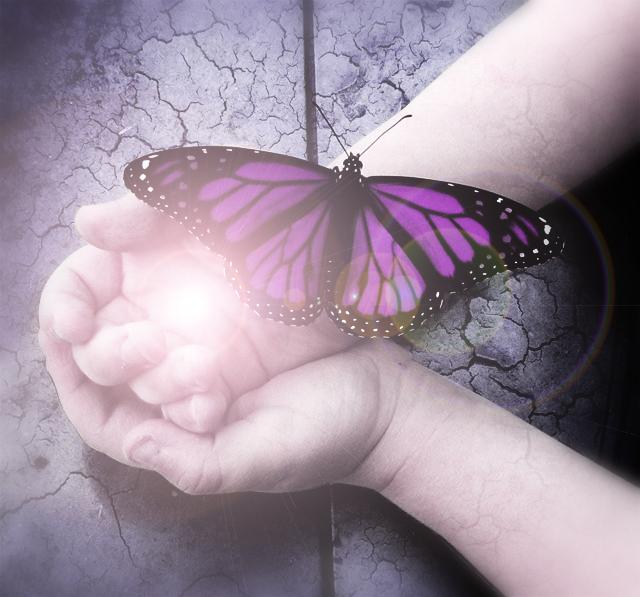 Butterfly by manuelvelizan