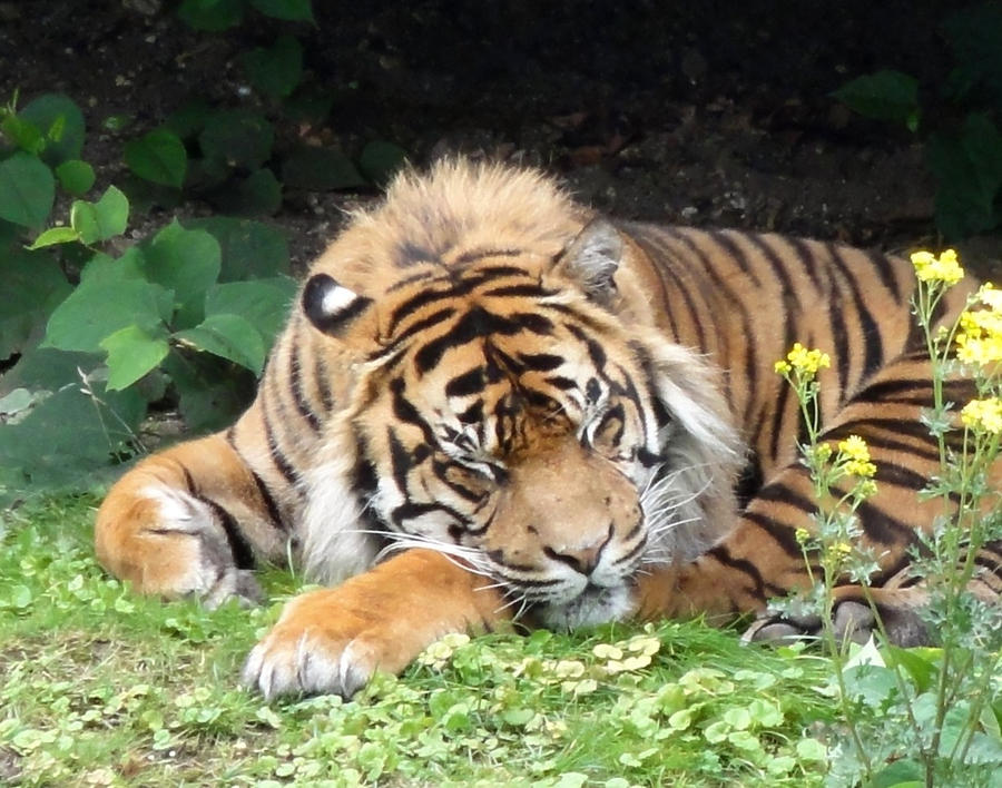 How To Stand Up For Yourself: Never Awaken A Sleeping Tiger ...