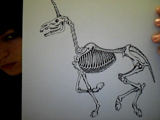 .skeletonUNICORN by MOL0KO