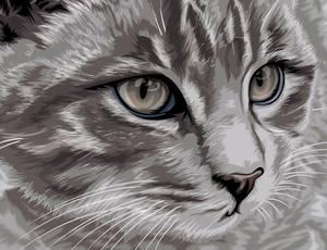 Stray Grey Kitten