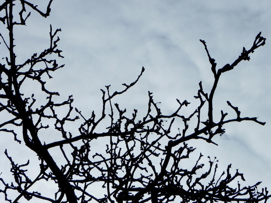 Grabbing at the Sky by owana-l-p45