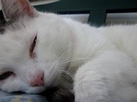 He's sooo sweet while sleeping