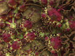 Gather Ye Rosebuds -- Pong 9