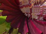 Fractal Flower Close Up