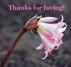 Pink Flower Thanks For Faving