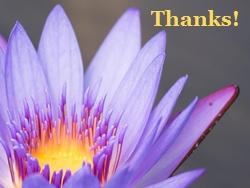 Purple Flower Thanks