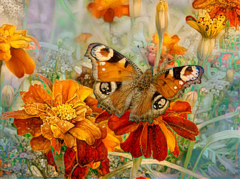 Butterfly in the Marigolds