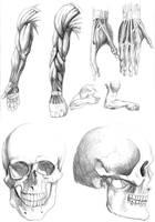 Anatomy studies by str4yk1tt3n